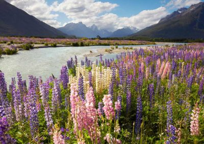 Rees-Valley-Lupins-mike-langford-1080x746